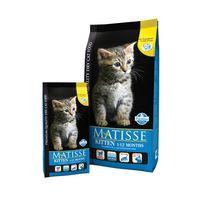 Matisse Матисс для котят