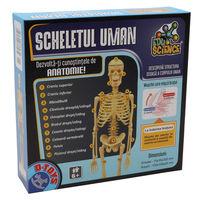 D-Toys Настольная игра Скелет человека