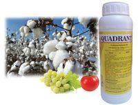 Квадрант - гербицид для защиты посевов подсолнечника - Агри Сайенсис