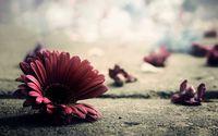 Картина напечатанная на холсте - Цветы 0011 / Печать на холсте