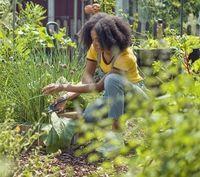 Ножницы садовые Gardena ExpertCut (12203-20)