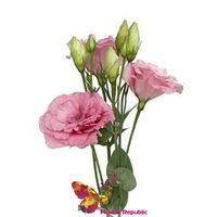 купить Эустома бледно-розовая Поштучно в Кишинёве