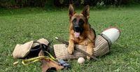 БАРХАН ! Корм для взрослых собак ,мясной  15кг