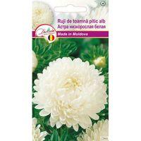 Семена  Астра низкорослая белая  0,1 гр DS (8015)