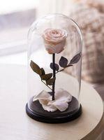 купить Вечная Кремовая Роза в колбе в Кишинёве
