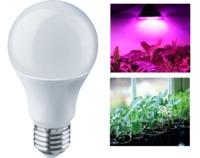 (BA) LED (10Wt) Лампа Navigator 61 202 NLL-FITO-A60-10-230-E27