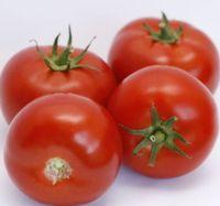 Cinto F1 (1000 semințe)