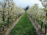 Система капельного орошения для садов и виноградников - Ирритек