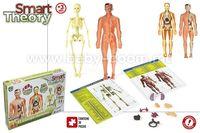 """Color Baby 43552 Образовательная игра """"Фигура человеческого тела"""""""