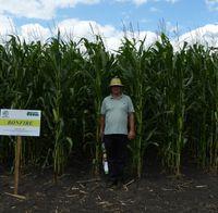 Бонфаер - Семена кукурузы - Семилас Фито