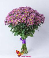 купить Хризантема кустовая фиолетовая  поштучно в Кишинёве