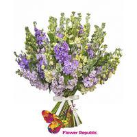 купить Букет из 15 разноцветных маттиол в Кишинёве