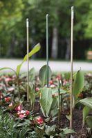 купить Опора  для растениий 11х1500 мм мет/пласт (5624/17) в Кишинёве