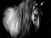 Картина напечатанная на холсте - Black & White 0012 / Печать на холсте
