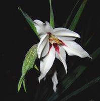 Картина напечатанная на холсте - Картина Цветы 0014 / Печать на холсте