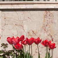 Мраморная розалия Бежевый Полированный 60 x 30 x 2 см