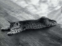 Картина напечатанная на холсте - Black & White 0023 / Печать на холсте