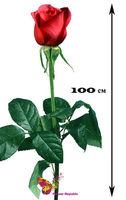 купить Роза красная Ecuador 100-110 см/ Поштучно в Кишинёве