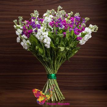 cumpără Buchet de 15 matthiola multicolorata în Chișinău