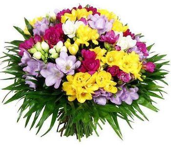 купить Букет из 101  разноцветной Фрезии в Кишинёве