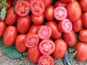 купить Хайнц 8009 F1 - семена гибрида томата - Хайнц Сидс в Кишинёве
