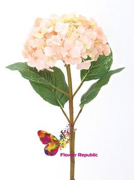 купить Гортензия розовая в Кишинёве