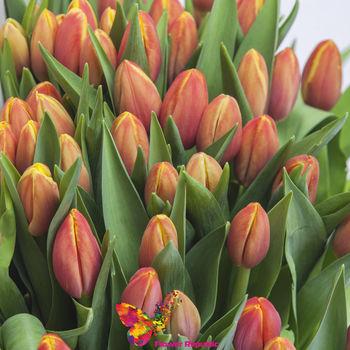 купить Алые голландские тюльпаны поштучно в Кишинёве