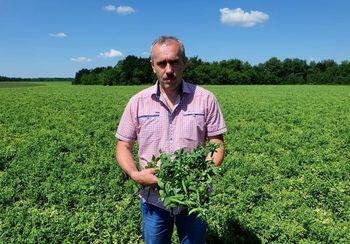 купить Оскар - семена гороха овощного - СЕМО в Кишинёве