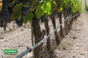 купить Система капельного орошения для садов и виноградников - Ирритек в Кишинёве
