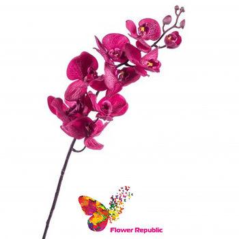 купить Орхидея фиолетовая в Кишинёве