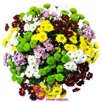 купить Букет «Хризантема Сантини разноцветный микс» в Кишинёве