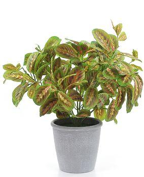 Цветы зелёная маранта, 39 см