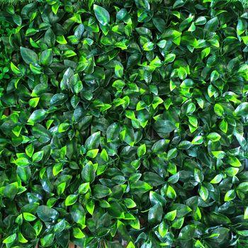 Декоративное покрытие Лимонное дерево 50 сm x 50 cm