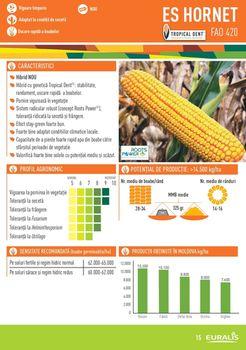 купить Хорнет - Семена кукурузы - Евралис Семанс в Кишинёве