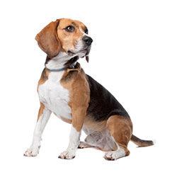 Взрослые собаки (1-6 лет)