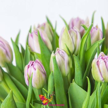 купить Фиолетовые голландские тюльпаны поштучно в Кишинёве