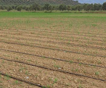 купить Система капельного орошения для полей - Ирритек в Кишинёве