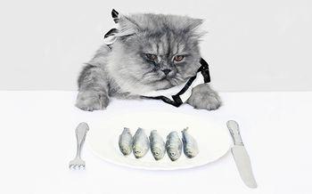 купить КИСКА! Корм для кошек мясо,15 кг в Кишинёве