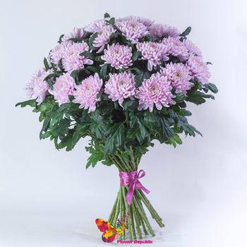 купить Хризантема крупная розовая поштучно в Кишинёве