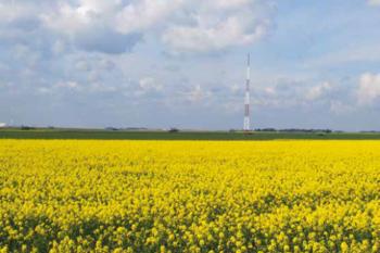 купить Квизз - Семена рапса озимого - RAGT Semences в Кишинёве