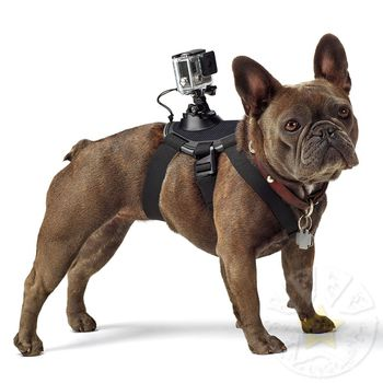 GoPro Fetch (Dog Harness) -for capture the world from dog's point of view, features camera mounts on the back and chest for a variety of perspectives, fits dogs from 7 to 54 kg, compatible with all GoPro cameras