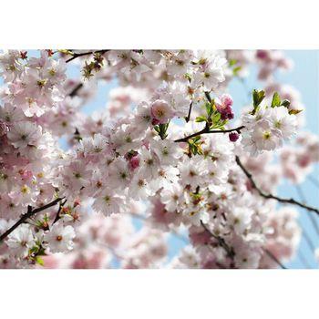 Komar Фотообои Spring 8-507