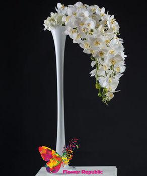 купить Орхидея белая в Кишинёве