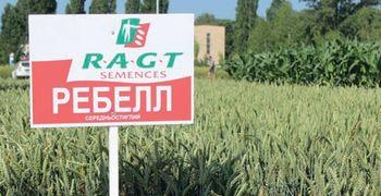 купить Ребелл - Семена озимой Пшеницы - RAGT Semences в Кишинёве