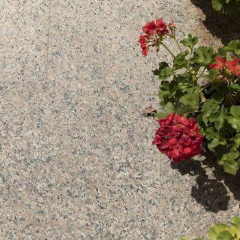 cumpără Granit Rosa Porrino Fiamat 60 x 30 x 1.5 cm în Chișinău