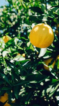 Clinex Air Lemon Soda 650мл Освежитель воздуха