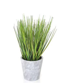 Цветы трава осока зелёная, 26 см