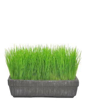 Цветы трава - газон в горшке, 23 см