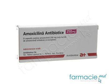 купить Amoxicilina 250 mg caps. N10x2 (Antibiotice) в Кишинёве