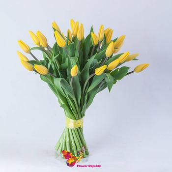купить Желтые  голландские тюльпаны поштучно в Кишинёве